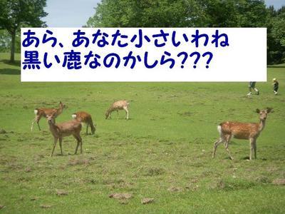 Dscn0751_2